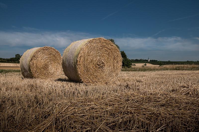 GAP (Gemeinsame Agrarpolitik) 2020: Beschämende Unverantwortlichkeit